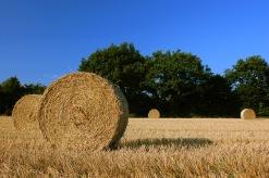 Harvest_Straw_Bales_in_Schleswig-Holstein