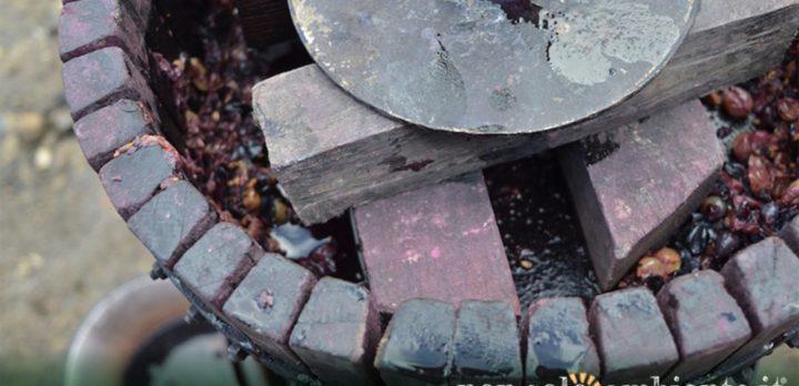 wineleather-riciclo-vinacce-ecopelle-nonsoloambiente-1280x620