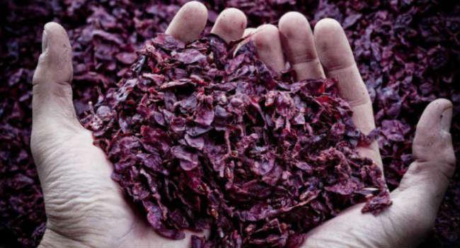 wineleather-vinaccia